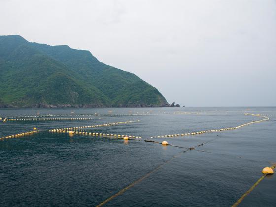 定置網漁業体験や競り体験